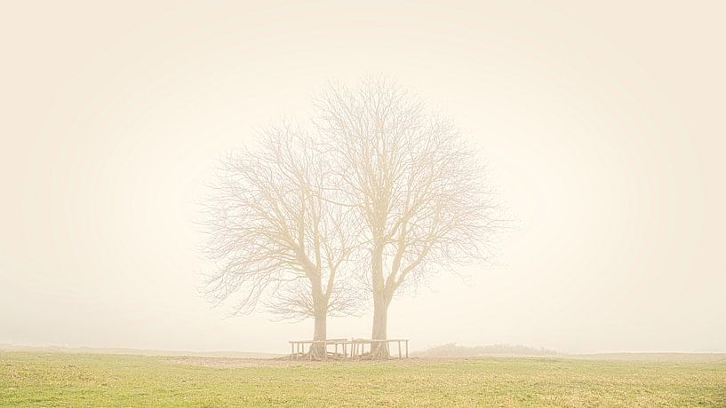 Bäume im Lentevreugd von Wim van Beelen