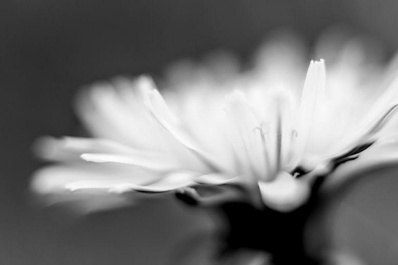 Kwetsbaar bloemetje II van Ania Liesting