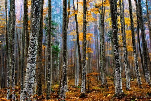 We zijn allen verschillend in hetzelfde bos van