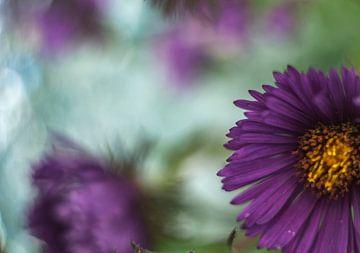 Wilde bloem van Minie Drost