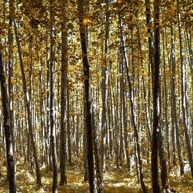 Geel herfst bos van Miranda van Hulst