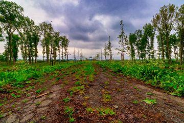 Verlaten weg op het platteland van Photo Henk van Dijk