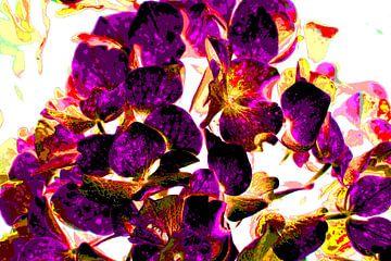 Hortensia / Hydrangea van Joke Gorter