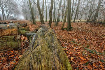 Baumstümpfe von Cees van Gastel
