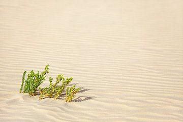 Wüstensand von BVpix