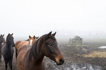 Paarden in de mist van Ger Beekes