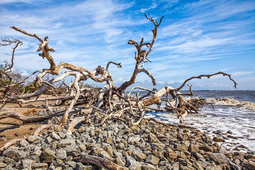 Verzilte bomen in het duingebied in Georgia VS. Wout Kok One2expose Photography. van Wout Kok