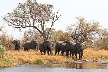 Elefanten vor der Wasserquerung van Britta Kärcher