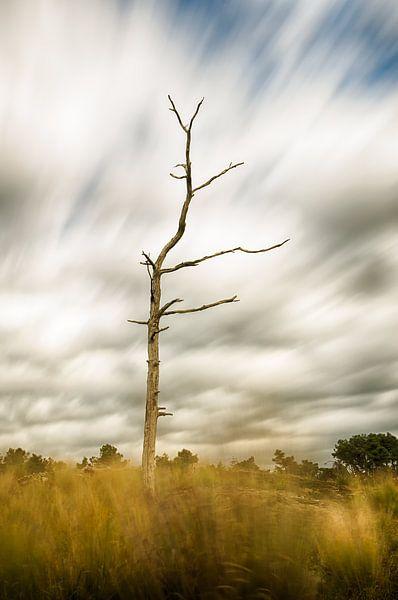 Dode boom van Mark Bolijn