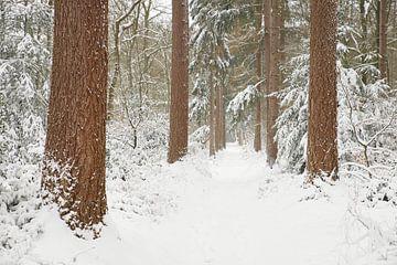 Waldweg im Schnee von Cor de Hamer