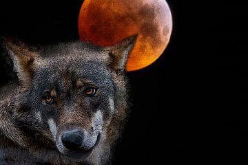 bloedmaanwolf van