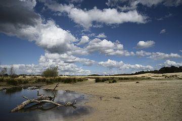 Dunes de Loonse et de Drunense sur Annet van Esch