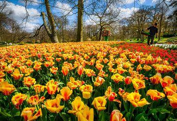 Keukenhof Park an einem schönen Frühlingstag von Chihong
