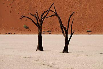 Bomen in Namibië van Roel Boom
