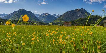 alpenweide in de Allgäu van