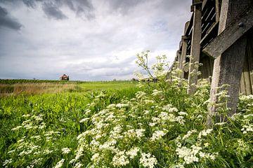 Der alte Hafen der Weltkulturerbe-Insel Schokland von Fotografiecor .nl