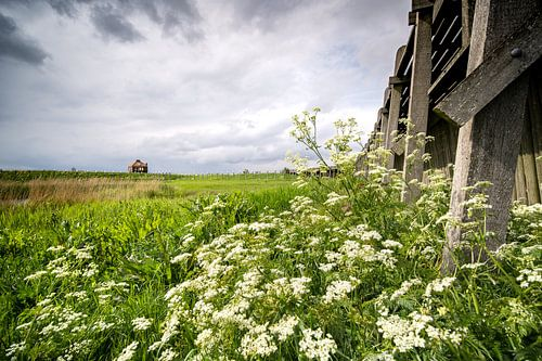 De oude haven van het werelderfgoed eiland Schokland