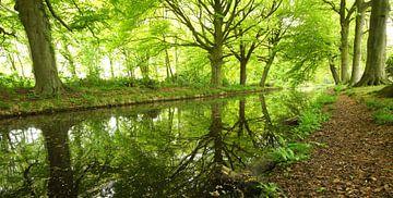 in to the wood von Dirk van Egmond