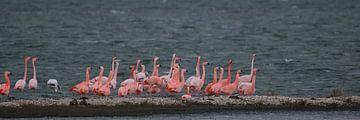 flamingo's 8 van Marloes van der Beek-Rietveld