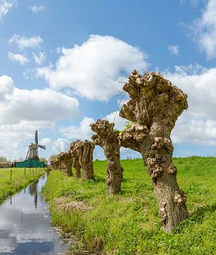 Papierproduzierende Windmühle genannt der Schulmeister, Westzaan, Nordholland, die Niederlande von