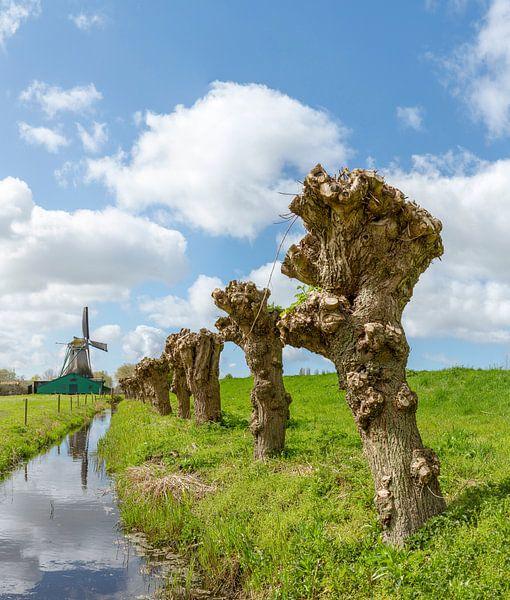 Papiermolen De Schoolmeester, Westzaan, , Noord-Holland van Rene van der Meer