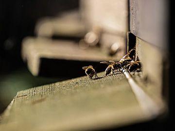 Bijen drukte van Larissa Geuke