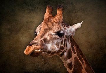De giraffe van Bert Hooijer