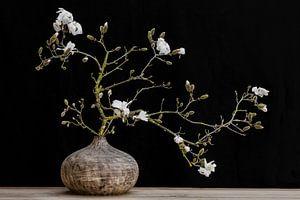 Magnolie in Vase