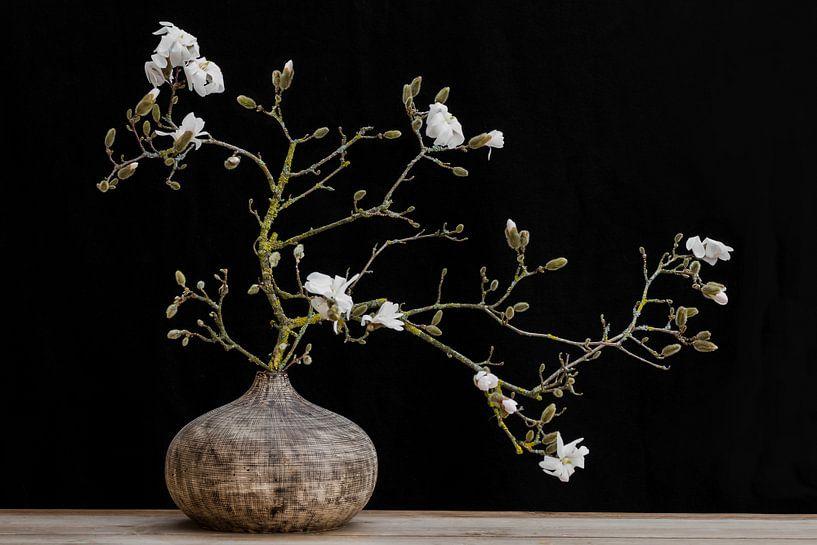 magnolia en vase sur Klaartje Majoor