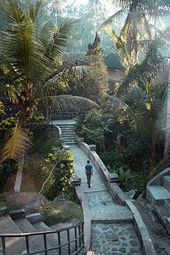 Bali - die Tropen von maarten starink