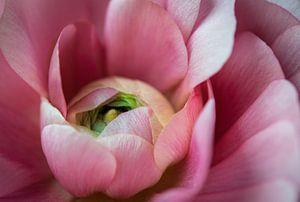 Hart van een roze roos