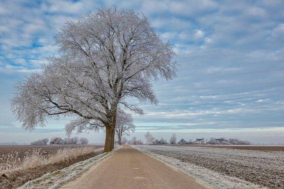 rijp aan de bomen in de polder