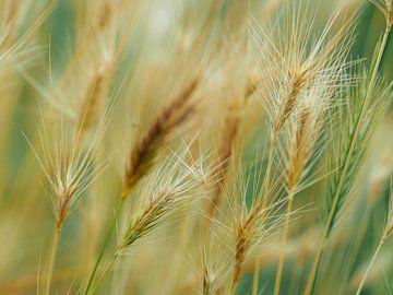 Gräser 3 von Miriam Meijer, en plein campagne.....
