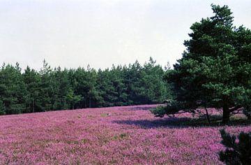 Breite Fuhre, Lüneburger Heide van Joachim Serger