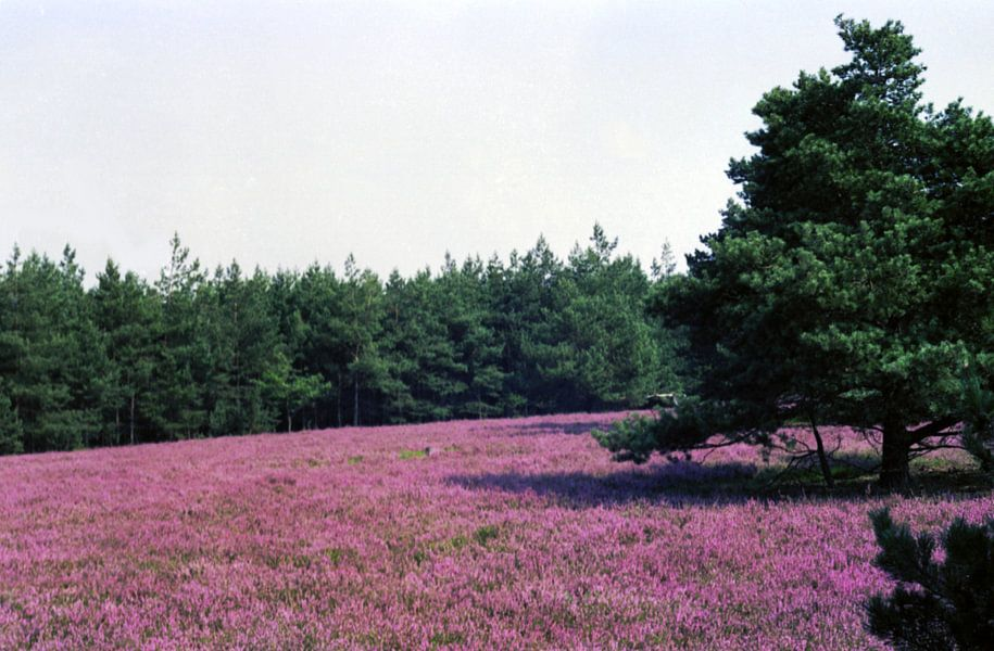 Breite Fuhre, Lüneburger Heide