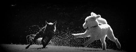waterhonden