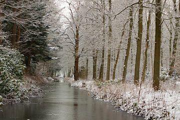 IJzig koude natuur van