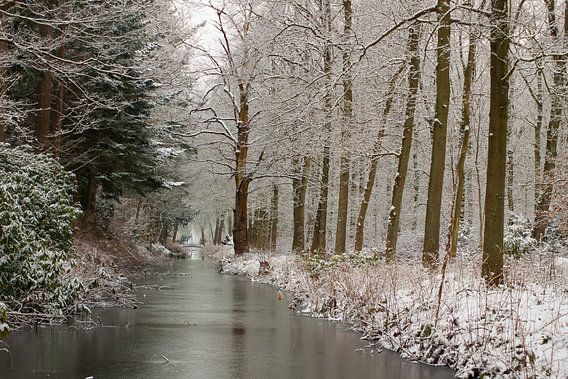 IJzig koude natuur van Harld Roling