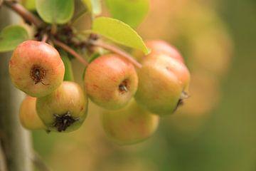 Appels van Marcel van Rijn