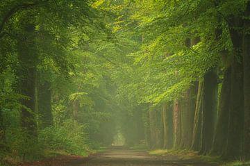 Schöner Morgen im Buchenwald von Francis Dost