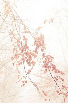 Caramel bladeren van Lavieren Photography