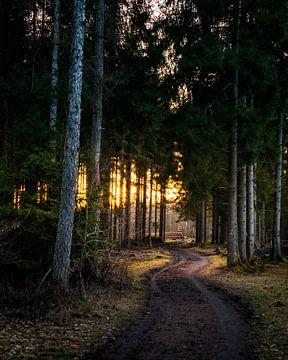 Evening Walk von Joris Machholz