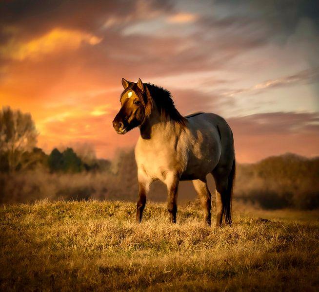 Koninkspaard bei Sonnenuntergang von Marjolein van Middelkoop