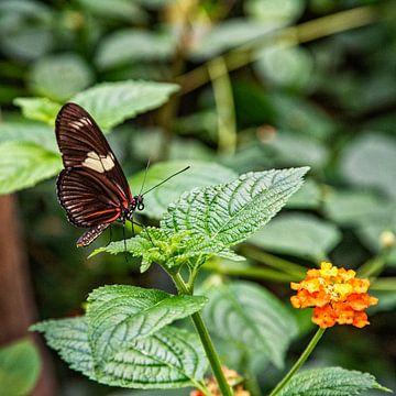 Schmetterling auf Blatt von Michel Groen
