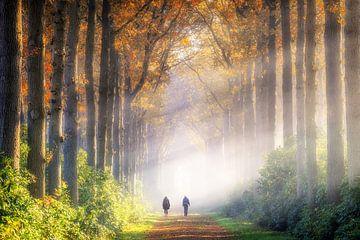 Wandelaars in de mist van