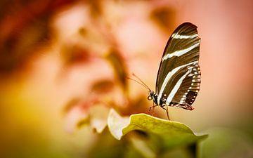 Heliconius Charithonia / Zebravlinder van Sran Vld Fotografie