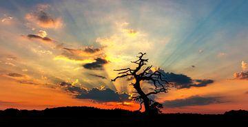 Boom bij ondergaande zon van Alex Dallinga