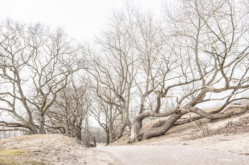 Amsterdamse Waterleidingduinen van Marian Smeets