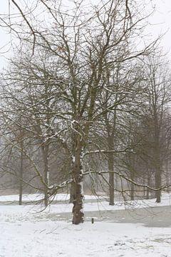 Großer Baum im Schnee von Rosalie Broerze