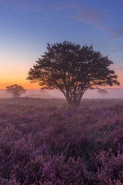 Heide in Hilversum in de ochtend (langwerpig) van Michiel Dros